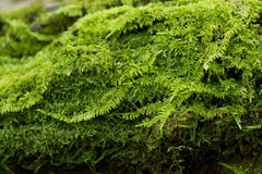 Green fern on timber Royalty Free Stock Photos