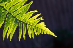 Green fern tree growing in summer. Fern with green leaves on natural background. Green is the color of spring and hope. Texture