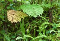 Green fern and vegetation. Green fern vegetation leaves tropical stock image