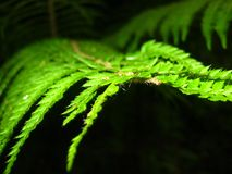 Green fern, which in a special way adorns the forest. stock image