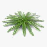 Green fern on white. 3D illustration Stock Image