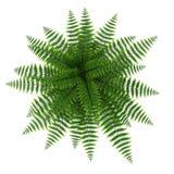 Green fern on white. 3D illustration Stock Photo
