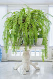 Green fern in white pot on table, English country style Stock Image