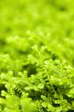 Green ferns Stock Photo
