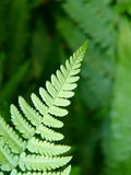 Green ferns Stock Photos