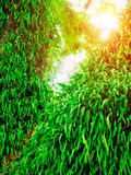 Green ferns on big tree with sun light in jungle. Abstract natur Stock Images
