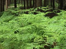 Green ferns in a forest Stock Photo