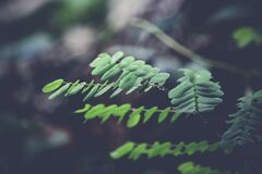 Green ferns in forest Stock Photo