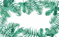 Green ferns in the forest royalty free illustration