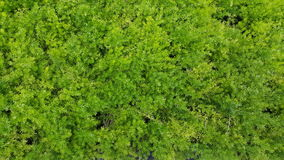 Green ferns leaves detail. In planter, landscape design Royalty Free Stock Images