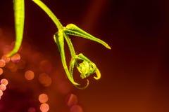 Green ferns stock photos