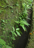 Green ferns on old wall. A photograph of many different species of green ferns and moss growing on an old wall. Vertical color image, nobody in picture royalty free stock photo
