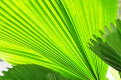 Green ferns in sunlight Royalty Free Stock Photography