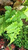 Green ferns on tree in  tropical garden Stock Photo