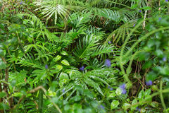 Green ferns in tropical forest. In close up Royalty Free Stock Photos