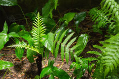 Green ferns in tropical forest. In close up Stock Images