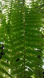 Green ferns Royalty Free Stock Image