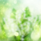 Green festive bokeh background Royalty Free Stock Photography