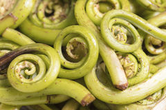Green Fiddlehead Ferns in a Bunch. A bunch of green fiddlehead ferns ready to be prepared in a dish Royalty Free Stock Photos