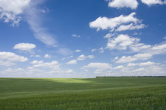 Green fiel and blue sky Royalty Free Stock Photo