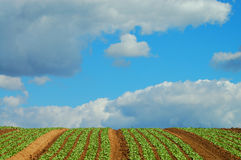 Green field 1. Green brown field with a beautiful background of blue cloudy sky Royalty Free Stock Photo