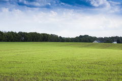 Green field. Nice green field and cloudy sky Stock Images