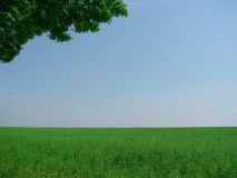 Green field. And branch of tree over blue sky Royalty Free Stock Photography