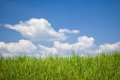 Free Green Field Stock Photos - 14196213