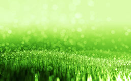 Green field. Background of green field (a green grass with bokeh Stock Image