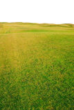Green field. Green grass field isolated on white background Stock Photography