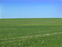 Green field. Expanse of green field and blue skies stock image