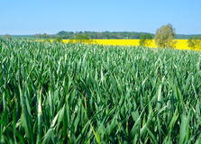 Green field Royalty Free Stock Photography