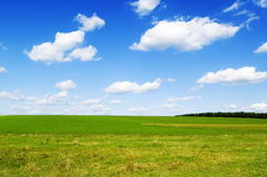 The green field. On background blue sky Royalty Free Stock Photos