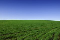 Green Field. A fresh green field landscape with blue sky Royalty Free Stock Photography