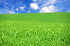 Green field Royalty Free Stock Photo