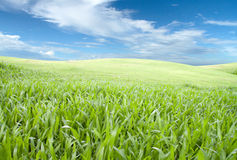 Green field. Sunny spring day and green field Stock Photo