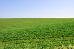 Green field. Green agricultural field with clear blue sky Stock Photo
