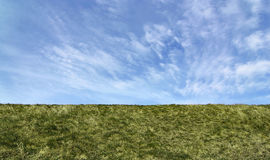Green Field. Straight horizon, suitable as background or banner stock photography