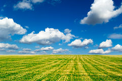 The green field. The field and blue sky Royalty Free Stock Photo