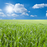 Green field. Green field,blue sky and sun Stock Photography