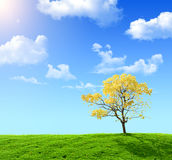 Green field. And yellow tree on a background of the blue sky Royalty Free Stock Photography