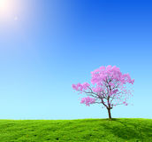 Green field. And pink tree on a background of the blue sky Stock Photos