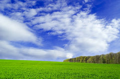 The green field. The green field and spring wood Royalty Free Stock Photos