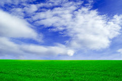 The green field. The green spring field on background  sky Royalty Free Stock Photography