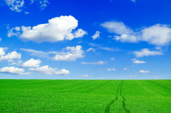 The green field. The green field and beautiful white clouds Royalty Free Stock Images