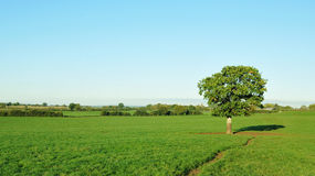 Green Field. Landscape View of a Green Field with a Clear Blue Sky Above Stock Images