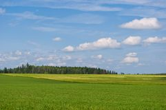 Green field. Vivid green grass field, forest and cloudscape Stock Photography