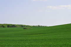 Green Field Stock Images