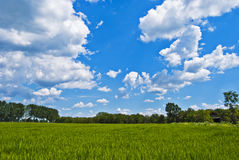Green field. Landscape of vernal green field with white clouds on blue sky Stock Photography