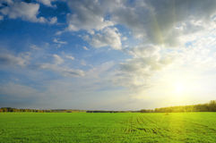 Green field. Under blue sky. Beauty nature background Royalty Free Stock Image